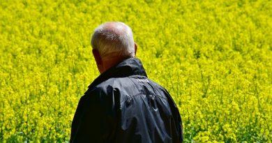 Wie baut sich die Rentenversicherung auf?